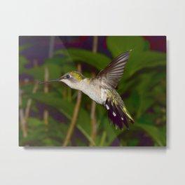 Flying hummingbird 55 Metal Print