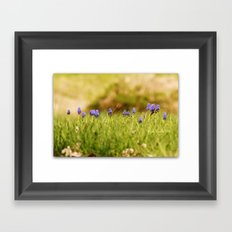 Mini Landscape of the Pretty Purple Hyacinths ~ & a bee Framed Art Print