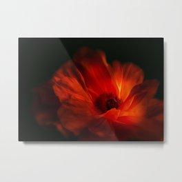 Mohnblüte bei Nacht Metal Print