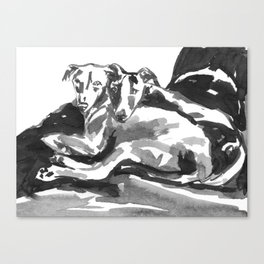 Greyhound -3 Canvas Print
