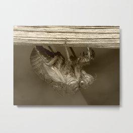cicada exoskeleton Metal Print