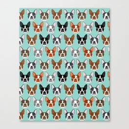Boston Terrier heads cute pet portraits terrier owner must have gifts hipster dog breeds cute puppy Canvas Print