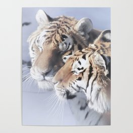 Tiger Love Poster