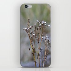 Frosty Seeds iPhone & iPod Skin