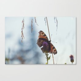 Mountain Butterfly Canvas Print