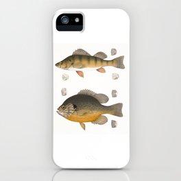 Fish illustration iPhone Case