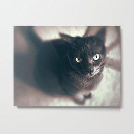 Gray Cat Frown Metal Print
