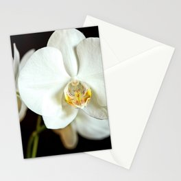 White Phalaenopsis Moth  Orchid Stationery Cards