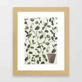 Hoya Carnosa / Porcelainflower Framed Art Print