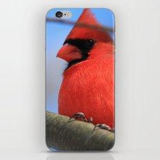 The Cardinal Portrait iPhone & iPod Skin