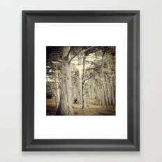 Pebble Cypress Framed Art Print