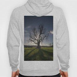 Holy Tree Hoody