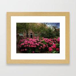 Hydrangea Garden In Woudrichem The Netherlands Framed Art Print
