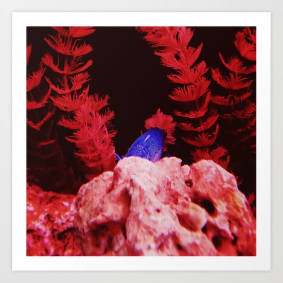 Blue Shrimp Art Print