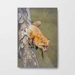 Fox Jumping From Tree Metal Print