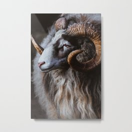 Mountain ram portrait close up. Mountain sheep print Metal Print