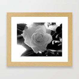 Petals B&W Framed Art Print