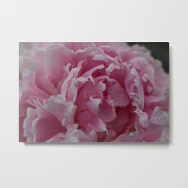Frilly Pink Flower Metal Print