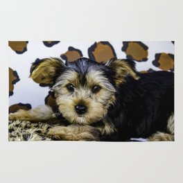 Yorkshire Terrier Puppy with Large Ears in front of a Leopard Print Background Rug
