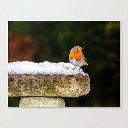 Robin on Snowy Birdbath Canvas Print