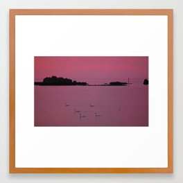 signets at dusk. Framed Art Print