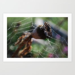Web of Water Art Print