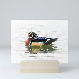 Wood Duck Three Mini Art Print