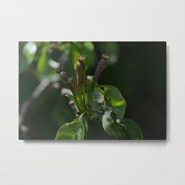 Proto-Pears Metal Print