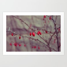 Snow Berries Art Print