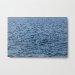 Lucky fishers-puffins Metal Print