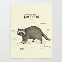 Anatomy of a Raccoon Poster