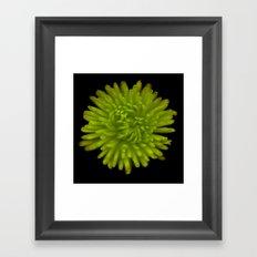 Flower 5 Framed Art Print