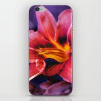 lily iPhone & iPod Skins featuring  Lily. by Mary Berg