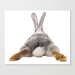 Cute Bunny Rabbit Tail Butt Image Easter Animal Canvas Print