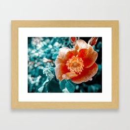 Technicolor Flower Framed Art Print
