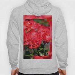 Flowerheads of red roses Hoody