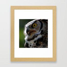 Great Horned Owl | Owls | Owl Photography| Wildlife Framed Art Print