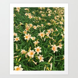 Lily Fields Art Print