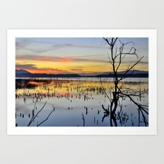 Lonely tree at the lake Art Print