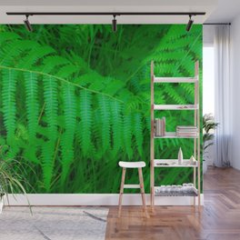 Fresh green fern Wall Mural