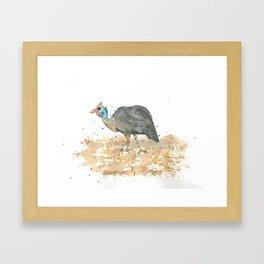 Blue helmeted Guinea fowl Framed Art Print
