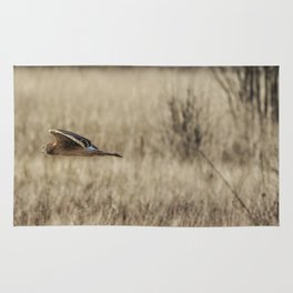 Northern Harrier Hunting, No. 3 Rug