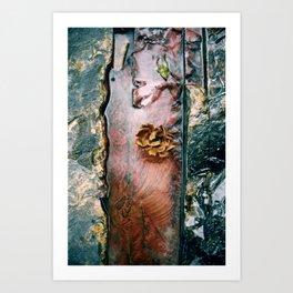La Gran Sabana Art Print