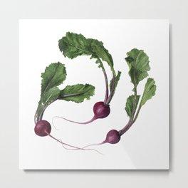 Scarlet Turnips Metal Print