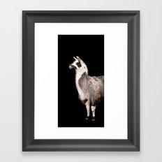 LAMA ( LLAMA) Framed Art Print
