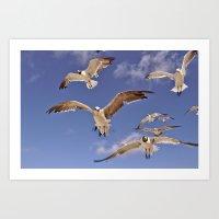Seagull Demands Art Print