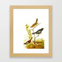Lark Finch, Prairie Finch, Brown Song Sparrow Framed Art Print