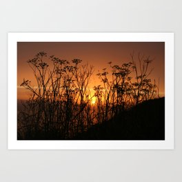 Sunset Over the Fennel Art Print