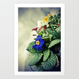 The Flower Pot Art Print