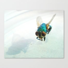 Beautiful Bother Canvas Print